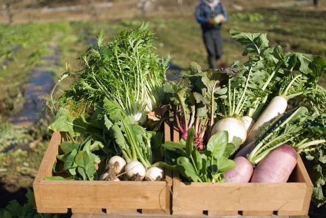 旬の野菜が揃っています